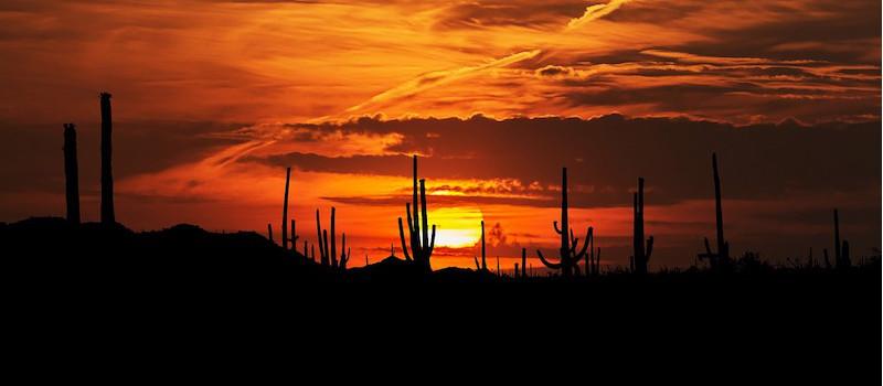 deserto-sonora-messico-tramonto-cactus