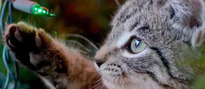 primo piano-gatto-natale-gioca-con-luce-albero